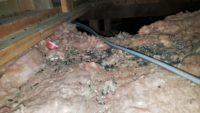 Portland pest control, bloom pest control, portland rodent pest control