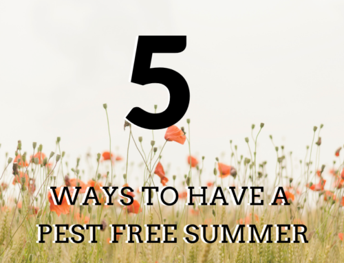 5 Ways to Have a Pest Free Summer